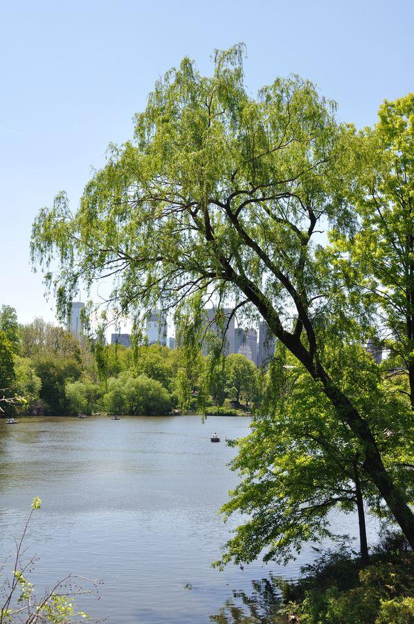 Walking for Central Park