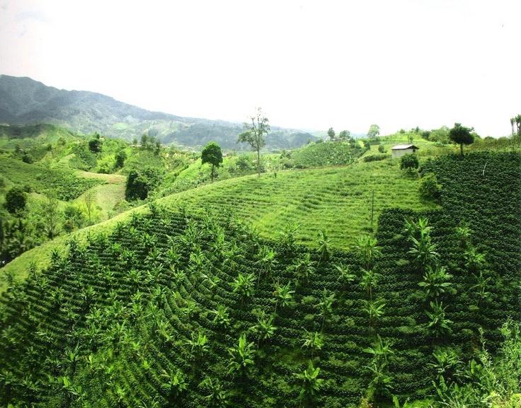 Huila Turística: Región cafetera de colombia, Garzon Huila