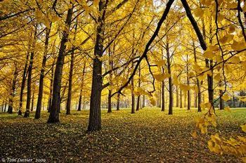 Las 14 especies de árboles que al abrazarlos sanan diversas partes del cuerpo - EcoPortal.net