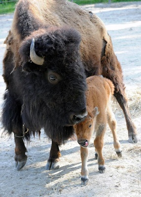 halloween buffalo zoo