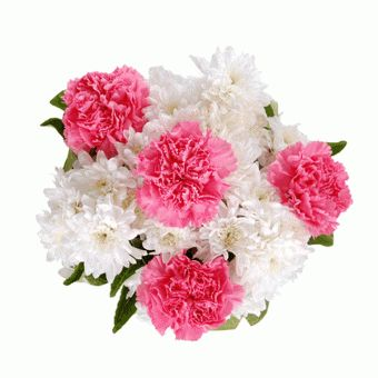 One #dozen of #colorful #carnation #bouquet for your #daughter on her birthday.