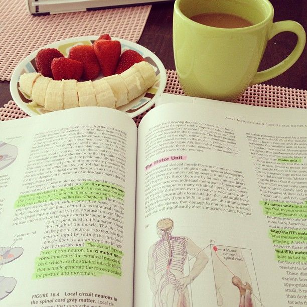 #breakfast #studying #neuroscience