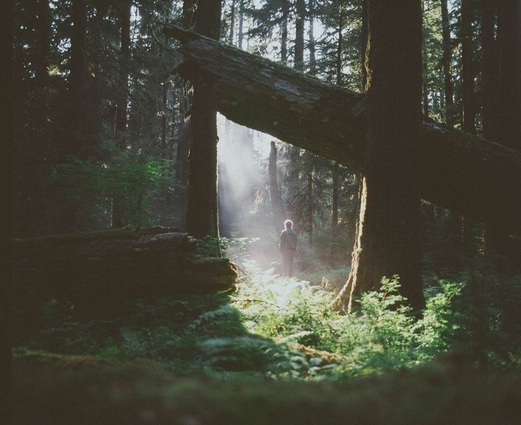 """""""I love that sweet smell of decay that surrounds me in forests and woods. A kind of mulchy, deep, rich rot that has no connotation of death or ending, but rather of life and age. A sense of perpetual destruction and rebirth."""""""