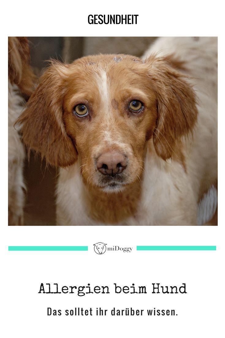 Allergien Beim Hund Hunde Hundegesundheit Und Hundepflege