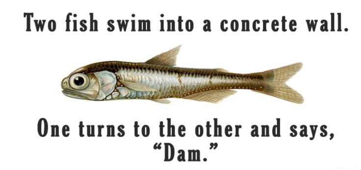 Could help myself fish swimming fish fish puns