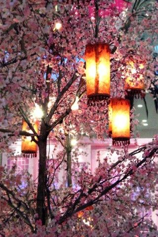 Cherry Blossom Lanterns, Kyoto, Japan