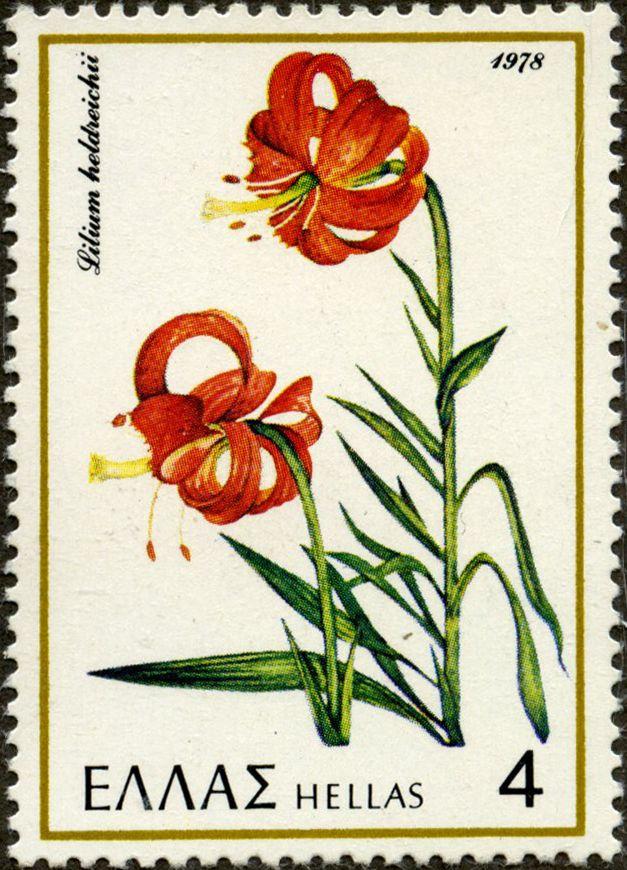 Lilium heldreichii GRECIA 30/03/1978