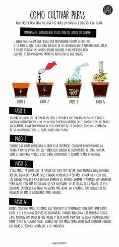 M s de 25 ideas incre bles sobre cultivar papas en for Como cultivar patatas