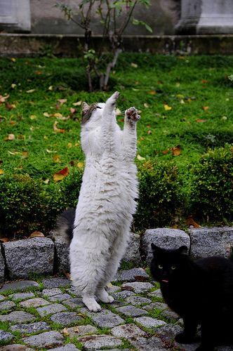 Arkeoloji Müzesi'nin tombul kedileri | Flickr - Photo Sharing!