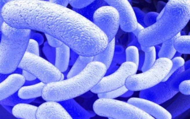 Το πανίσχυρο φυσικό αντιβιoτικό που «εξαφανίζει» όλα τα βακτήρια και τα μικρόβια