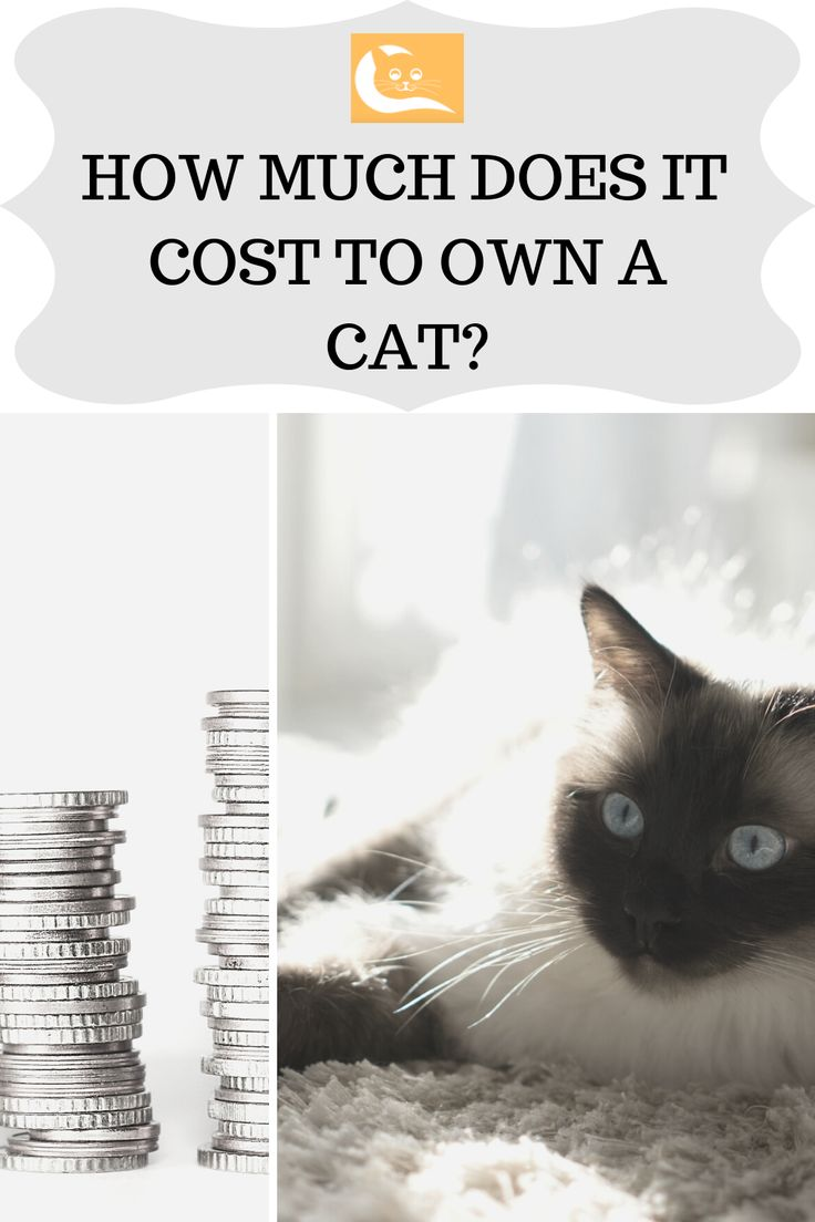 How Much Does it Cost to Own a Cat Owning a cat, Cats