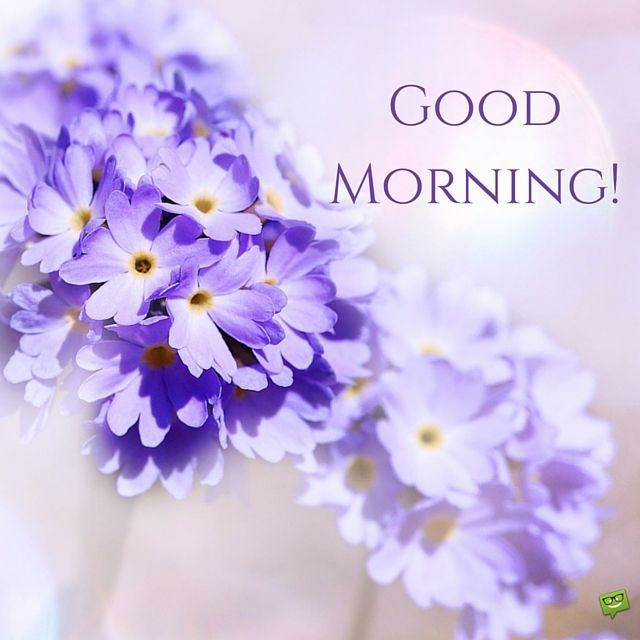 Good Morning Picture with purple flower