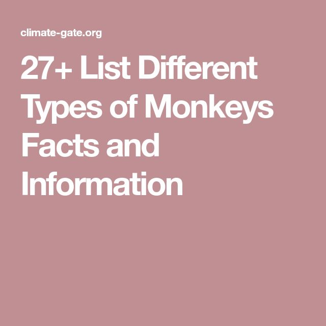 27+ List Different Types of Monkeys Facts and Information