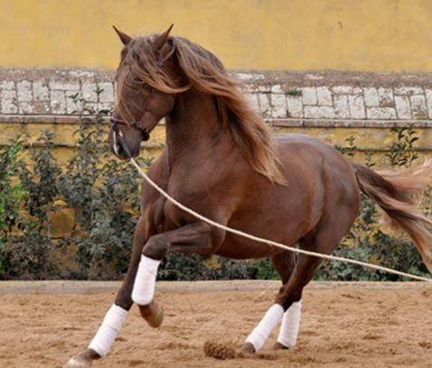 e-horses