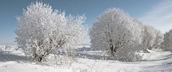 Письмо «Как рисовать деревья в инее?» — Марина Трушникова — Яндекс.Почта