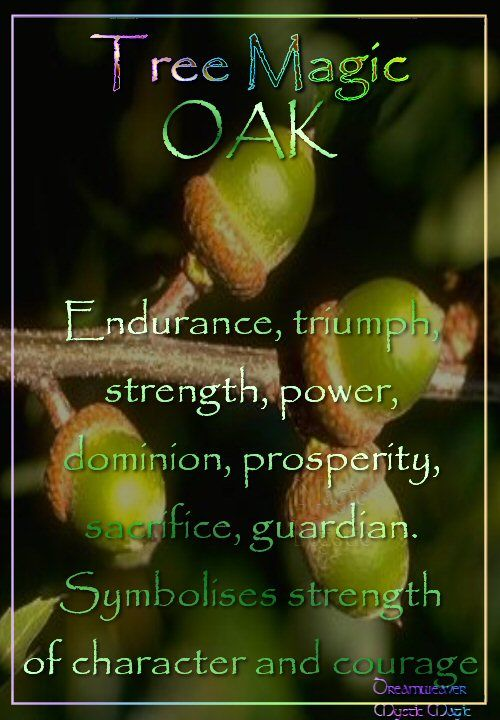 OAK Endurance, triumph, strength, power, dominion, prosperity, sacrifice, guardian, liberator, Symbolises strength of character and courage