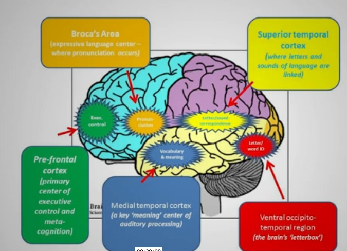 Food to enhance memory and concentration image 4
