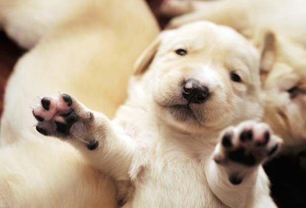 Χαριτωμένα κουτάβια από διάφορες ράτσες σκύλων