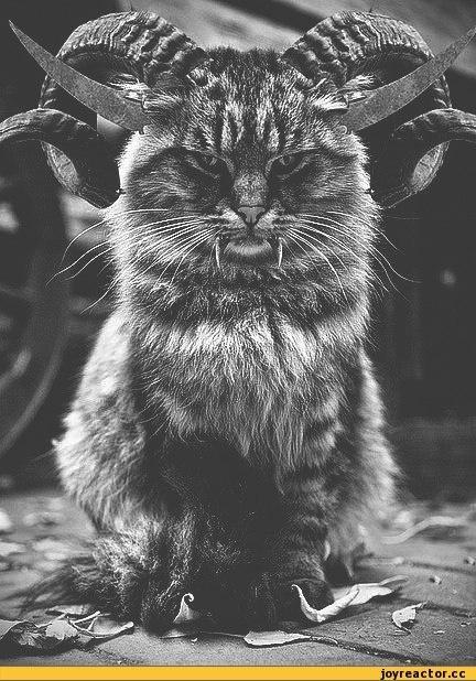кот,песочница