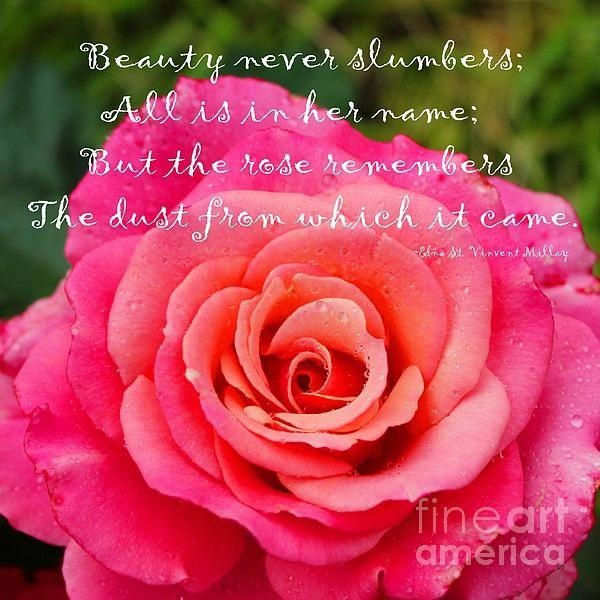 Gentle rose Rumi quote