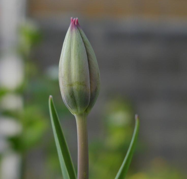 wikiHow to Practice Loving Kindness Meditation (Metta) -- via wikiHow.com