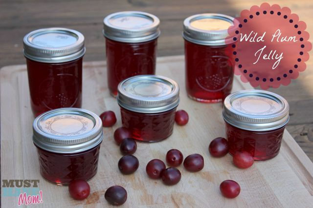 Last night I made two batches of Wild Plum Jelly from wild plums my mom gave me from her tree. It turned out SO good! Wild plum jelly recipe below!