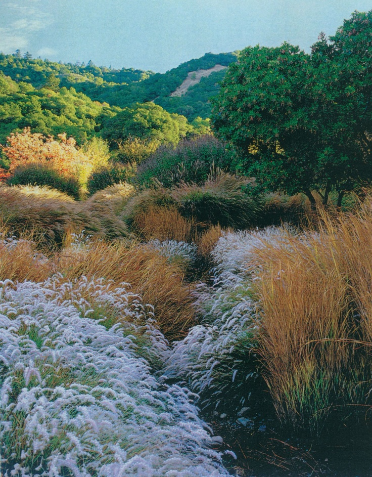 22 best oriental grasses images on pinterest fountain for Oriental grass for shade