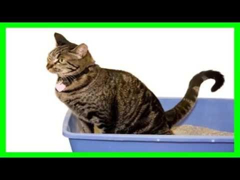 Home Remedies Fans — ❤♛ Como Espantar Gatos del Jardin❤ ♛ SUSCRIBETE A...