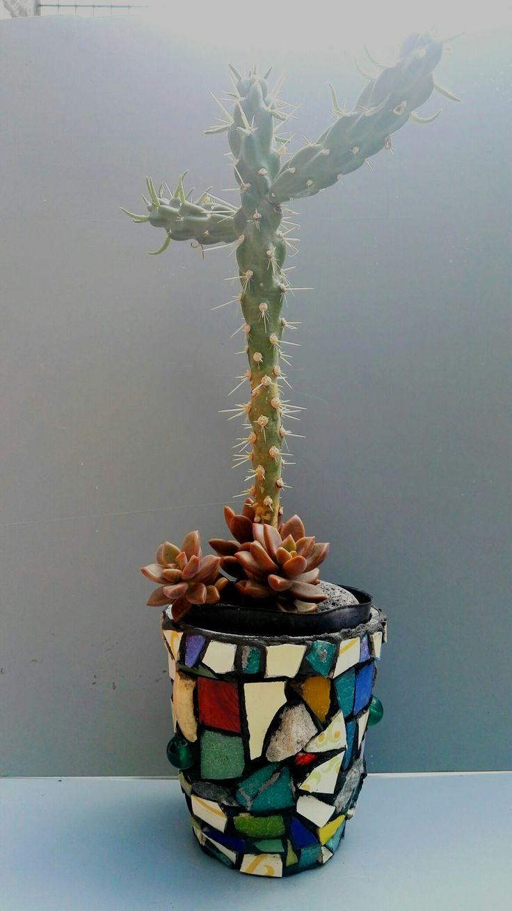 Cactus en maceta con Mosaiquismo by Ricardo Stefani