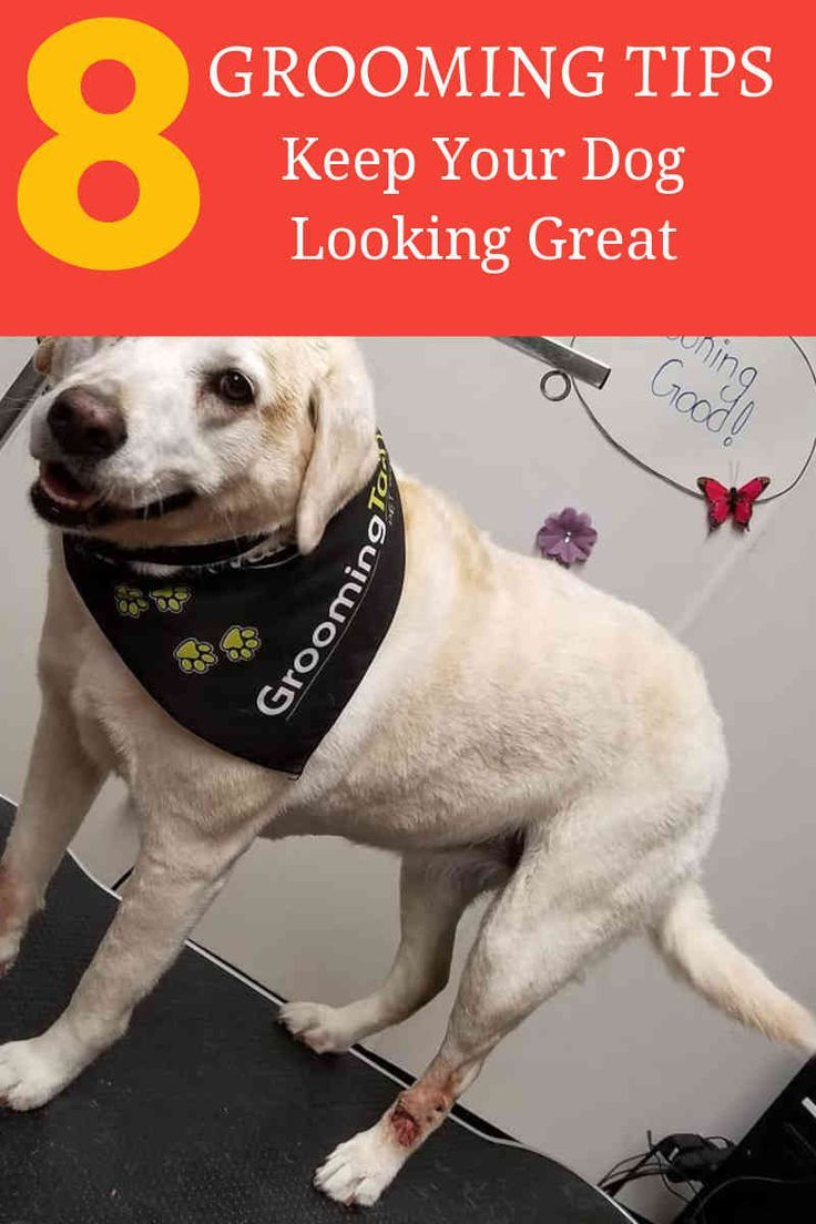 Save Money By Grooming Your Dog At Home Pet Grooming Near Me
