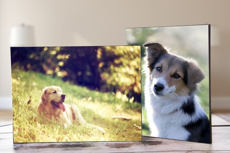 Unsere neue Fototafel wird mit den Bildern eurer liebsten Vierbeiner zum Deko-Objekt schlecht hin
