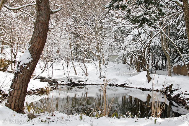 Shinbu Onsen - Nagano Prefecture: Mighty Hands, Hacia Afuera, Winter Scene, Favorite Places, Beautiful Places, Nagano Prefectur, Japan Landscape, Shinbu Onsen, Mothers Natural