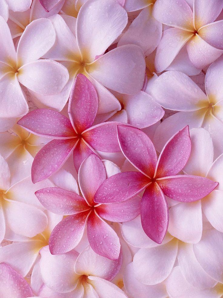 Impresionantes flores rosadas