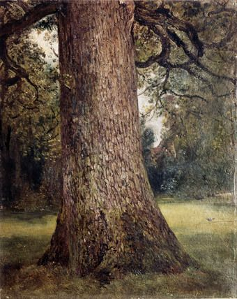 Study of the Trunk of an Elm Tree, 1821.