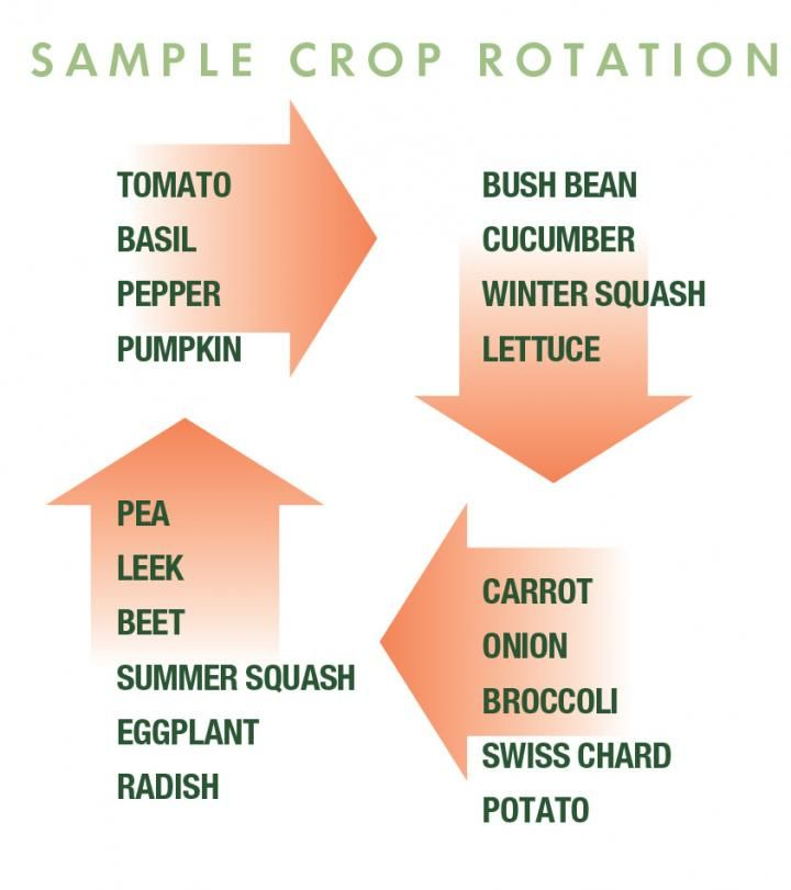 Crop Rotation Chart For Small Vegetable Garden In 2020 Crop Rotation Small Vegetable Gardens Perennial Vegetables