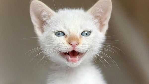 تحميل 100 صورة خلفيات قطط رائعة وعالية الدقة مداد الجليد Cats Cute Cats Kittens Cutest