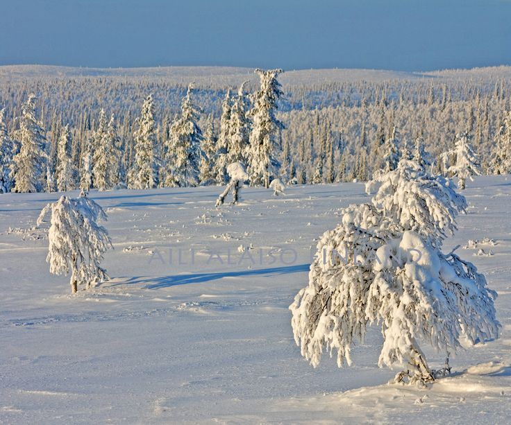 """ snow white, sky blue "" by Aili Alaiso  Lappi Lapland Finland"