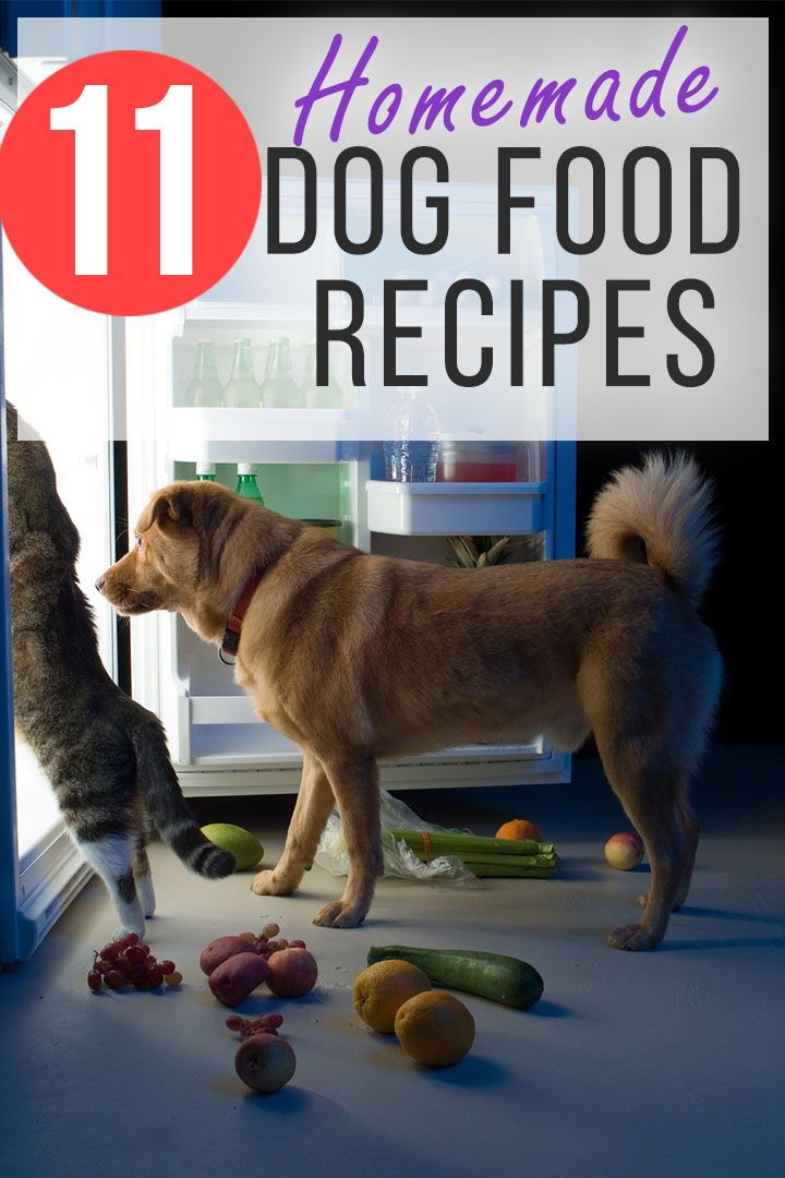 Get Control Over Your Dogs Health With Diy Homemade Dog Food