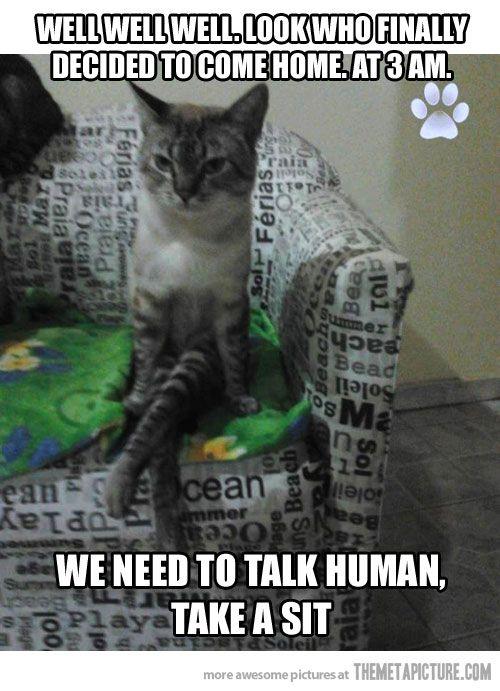 cat acting like human meme