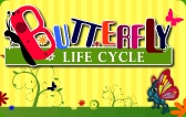 Butterfly Life Cycle Video