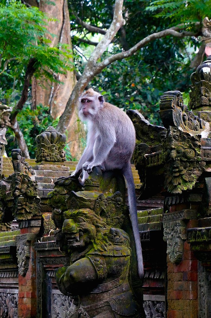 The Sacred Monkey Forest, Ubud, Bali
