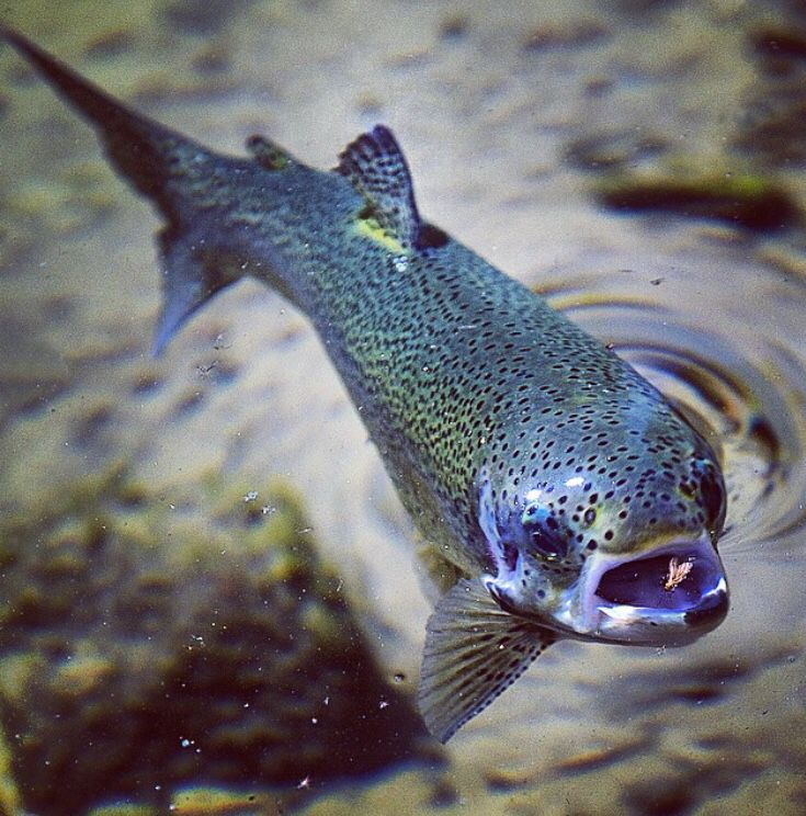 302 best images about fly fishing 39 s finest on pinterest for Fly fishing apps