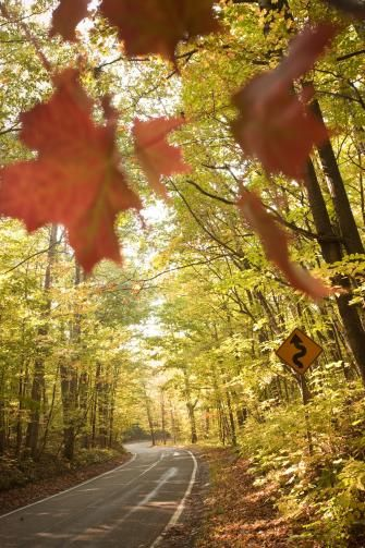 Tunnel of Trees Scenic Drive in Michigan | Midwest Living … M-119 … curvy road snaking north of Harbor Springs, following Lake