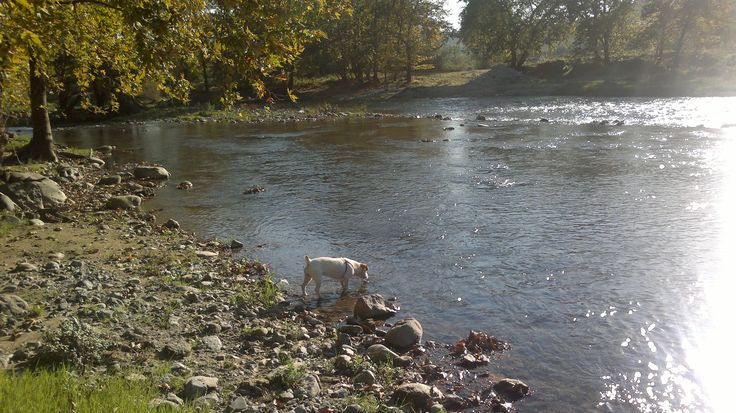 Our ''Pluto'' is drinking water from the creek