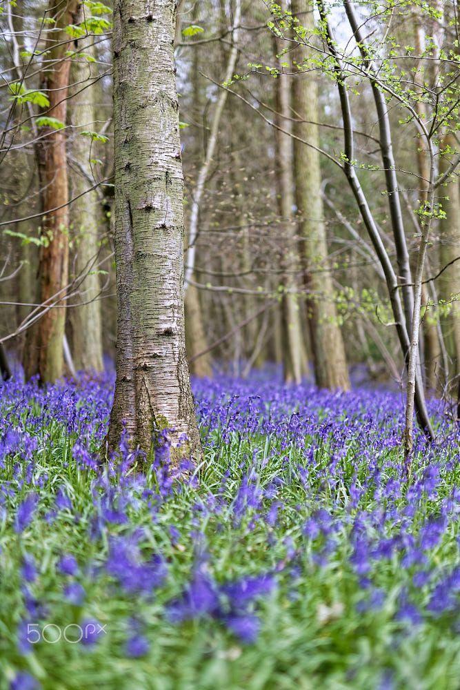Spring Forest Spring Forest Woods Photography Spring Landscape