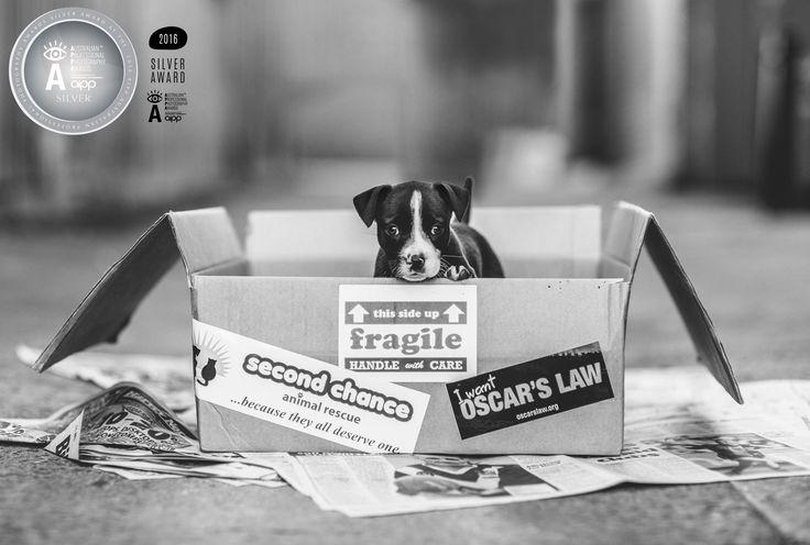 Melbourne award winning pet photographer, Oscars Law #adoptdontshop © Hyggelig Photography