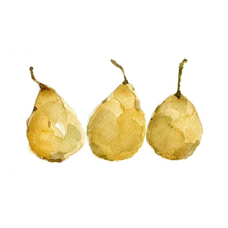 Yellow Pears Print of  original  watercolor painting of 3  pears still life, botanical,  golden yellow ,  limited edition.