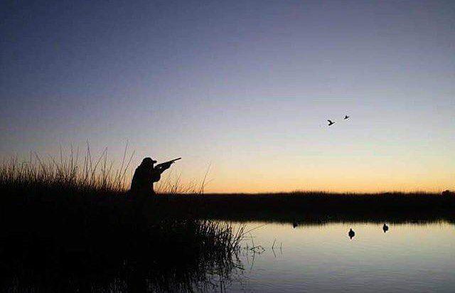 #caccia #passione #natura #cinghiale #falco #lepre #setteringlese #englishsetter #canidaferma #canidacaccia #sirya #rocky #7mesi #ferma #fermasuquaglia #coturnix #coturnice #pernice #addestramento #chasse #beccaccia #quaglia #beccasse #hunt #hunting #hunting #huntingquails #follow #instasetter #instadog #instachasse http://misstagram.com/ipost/1545134296556960256/?code=BVxa3TMjPoA