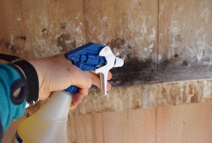 Natural Coop Disinfectant | HenCam