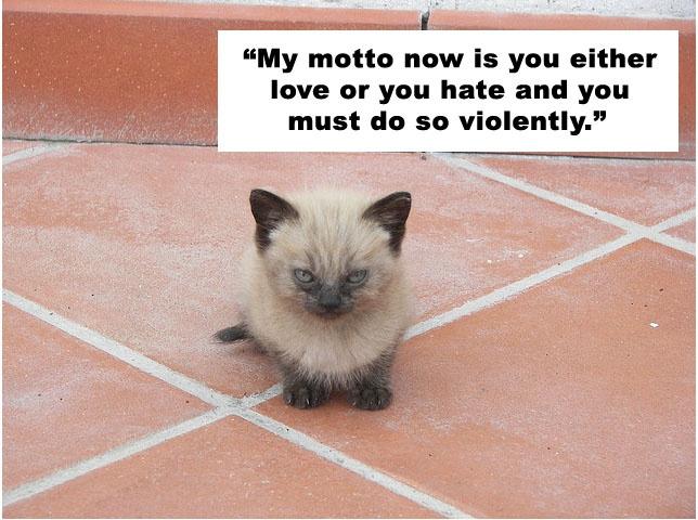 Kitten quoting Charlie Sheen. Comedy gold.